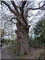 TQ4569 : London Loop Walk No. 2, Bexley, Kent by Christine Matthews