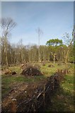 TQ6895 : A Newly Coppiced Area in Norsey Wood by Glyn Baker