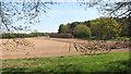TG1215 : Fields by Long Plantation by Evelyn Simak