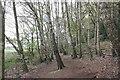 SJ5359 : Woodland Walk at Beeston Castle by Jeff Buck