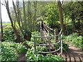 SO8166 : Footbridge into Shrawley Wood by Jeff Gogarty