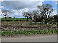 TL9795 : Cleared trees near Peels Farm by Hugh Venables