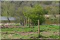 TQ0347 : Pig fields near Postford by Alan Hunt
