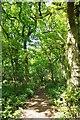 TL8602 : Path Through Mundon Furze by Glyn Baker