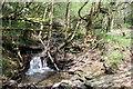 ST2097 : Woodland stream, Cwm Dows by M J Roscoe