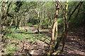 ST2097 : Footpath, Cwm Dows by M J Roscoe