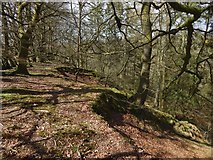 NS4177 : Beside the Murroch Glen by Lairich Rig