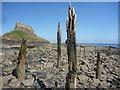 NU1341 : Coastal Northumberland : Spikes On Lindisfarne by Richard West