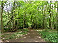 TQ6091 : Footpath in Woods at Little Warley Common by PAUL FARMER