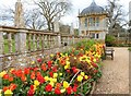 ST5017 : Fine display of tulips in the formal garden at Montacute House by Derek Voller