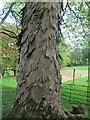 NY6820 : Appleby Castle: tree bark by Stephen Craven