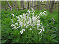 NJ2950 : Wild Hyacinths (Hyacinthoides non-scripta) by Anne Burgess