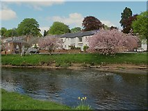 NY6820 : River Eden with cherry blossom, Appleby by Stephen Craven