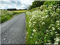 SO8642 : Cow parsley on the road verge by Philip Halling