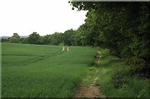 TL6902 : Bridleway Parallel to Margaretting Rd by Glyn Baker