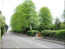 J3630 : Approaching St Colman's CoI graveyard along Tullybrannigan Road by Eric Jones