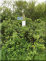 TM1648 : Footpath sign off Henley Road by Adrian Cable