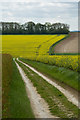SE9455 : Bridleway near Tibthorpe by Paul Harrop