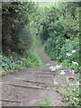 SY7381 : Osmington Mills: steps on the descent from Bran Point by Chris Downer