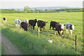 SP8817 : Cattle on Alnwick Farm by Chris Reynolds