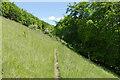 TQ1350 : Denbies Hillside near Dorking by Alan Hunt