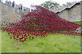 SK9771 : Poppies at Lincoln Castle by Julian P Guffogg