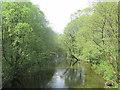 NY0815 : River Ehen. by steven ruffles