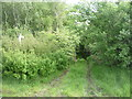 NY3460 : Track into Priesthill Plantation by JThomas