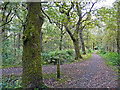 NY5661 : Woodland paths, Miltonrigg by Rose and Trev Clough