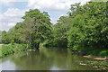 TQ0663 : River Wey by Alan Hunt