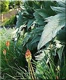 SX9164 : Plants, Upton Park, Torquay by Derek Harper