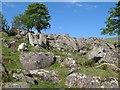 SH7267 : Boulder garden by Jonathan Wilkins