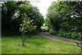 SO7730 : Track Leading to Glynch Farm by Ian S