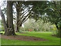 SW8339 : Open glade in the woodland garden, Trelissick Gardens by Derek Voller