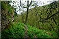 SK1765 : Path in Cales Dale by Bill Boaden