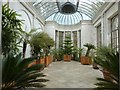 SW8339 : The Orangery at Trelissick House by Derek Voller