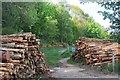 NT2438 : Timber stacks, Cademuir Forest by Jim Barton