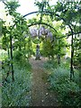 TQ5509 : Pergola leading to statue and wisteria by Rob Farrow