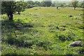 SX7476 : Bluebells near Emsworthy #2 by Derek Harper