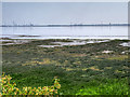 SJ4282 : Looking Across the Mersey Estuary by David Dixon