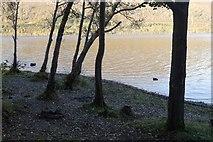 NN6523 : Beach, Loch Earn by Richard Webb