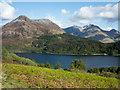 NN0960 : New bracken growth above Loch Leven by Trevor Littlewood