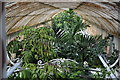 TQ1876 : Inside The Palm House by N Chadwick