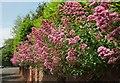 SX9063 : Valerian, Greenway Road, Chelston by Derek Harper