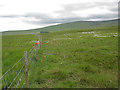 R9622 : Fence and Cotton Grass by kevin higgins