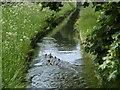 NY9875 : Whittledean Watercourse by Richard Webb