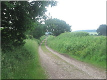 SJ3176 : Woodfall Lane towards Hilltop Farm by John Slater