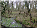 TG1139 : Wet woodland, Lower Bodham by Hugh Venables