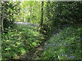 SE2436 : Stream through Outwood, with bluebells by Stephen Craven