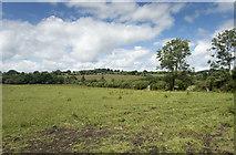 S7551 : Fields up to the skyline by Neville Goodman